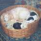 Calvert-Diana-Sleeping-Dogs.jpg