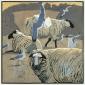 Common Gulls & Sheep.jpg