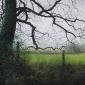 David Brammeld RBA PS_'Lonely Tree (Maer Hills)'_Pastel 300dpi.jpeg