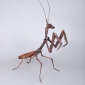 Nutcracker Praying Mantis 2.jpg
