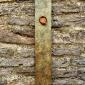 Wren Plaque 2.jpg