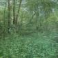 frood-caroline-undergrowth.jpg
