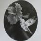 'Textures II' graphite work by Claire Anscomb