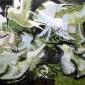 Atkinson-Kim-Sandwich Tern Colony, Cemlyn.jpg