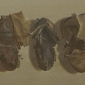 August-Lillias-Old Boots.jpg