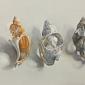 August-Lillias-Three Broken Shells.jpg