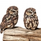 Griffiths-Simon-Little-Owl-Pair.jpg