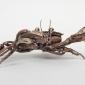 Padlock Shore Crab lr (15).jpg
