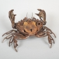Padlock Shore Crab lr (23).jpg