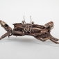 Padlock Shore Crab lr (3).jpg