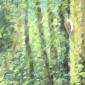 Phillips-Antonia-Woodland-afternoon-240717.jpg
