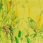 Pollard-Nik-White-tailed-bumble-bee-and-knapweed-2.jpg