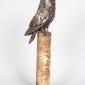 Shear Tawny Owl LR (6).jpg