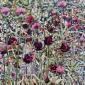 Butlin-Anne-Marie-Tulip-Garden.jpg