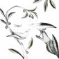 WEB-Forshall_Bea-Black-winged-Starling-and-Bali-mina.jpg