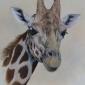 Giraffe by Simon Turvey SWLA