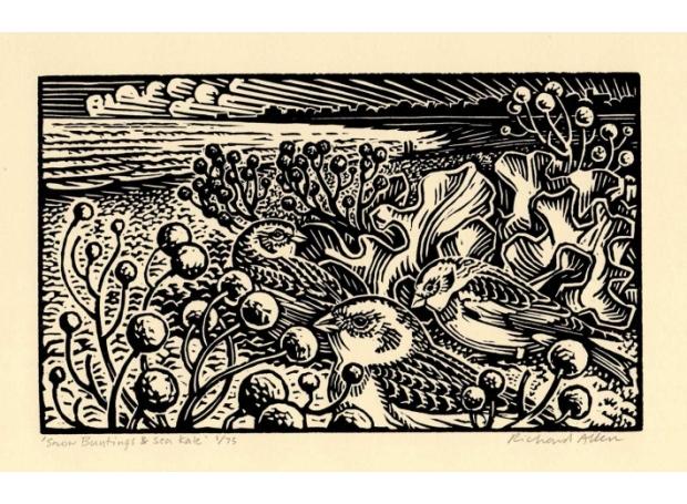 Allen-Richard-Snow-Buntings--Sea-Kale.jpg
