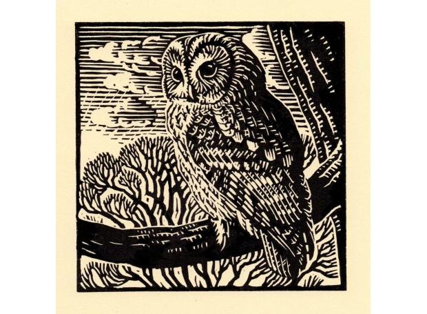 Richard Allen SWLA Tawny Owl