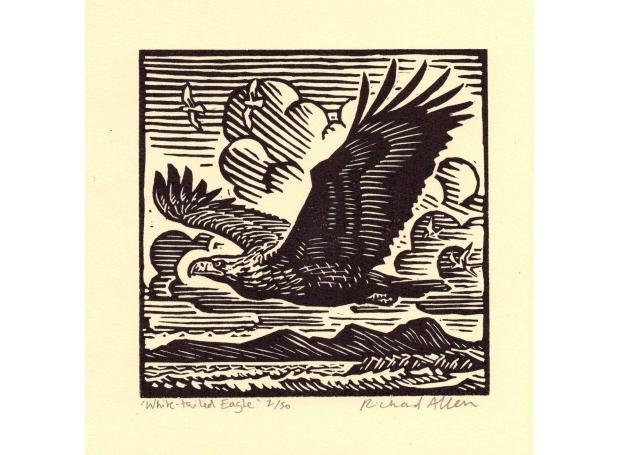 Allen-Richard-White-Tailed-Eagle.jpg