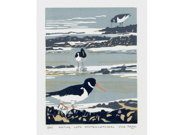 Angus-Max-Resting-with-Oystercatchers.jpg