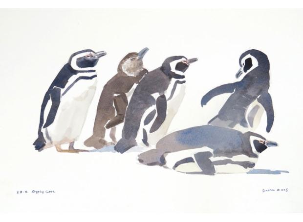 Rees-Darren-Magellanic-Penguins,-Gypsy-Cove.jpg