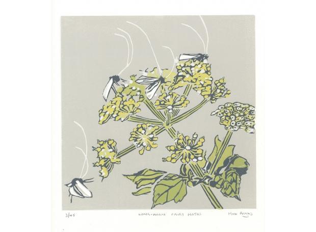 Angus-Max-Long-horn-fairy-moths-.jpg