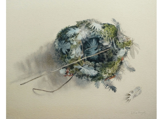 August-Lillias-Feathered-nest.jpg
