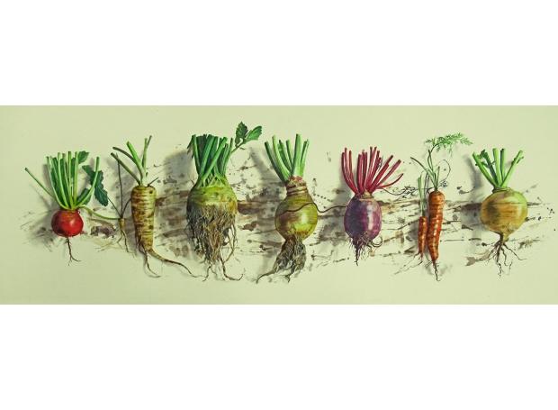 August-Lillias-Fresh-Root-Veg-29-x-91-cm.jpg
