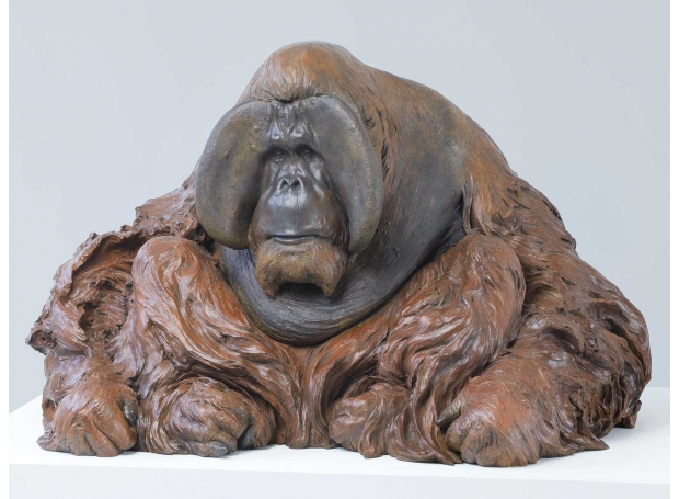 Bibby-Nick-Orangutan-Dagu.jpg