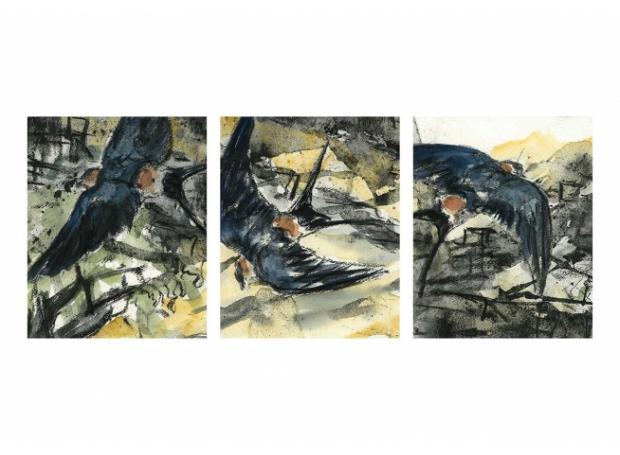 Brodde-Marco-Red-rumped-swallows-near-the-castle-Trujillo.jpg