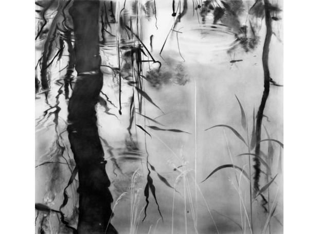 Clucas-Fiona-WaterlifeFoulshaw-Moss.jpg