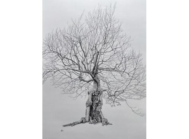 Dury-Liz-The Old Beech Sleeps in the Winter Sun Waiting for Spring.jpeg