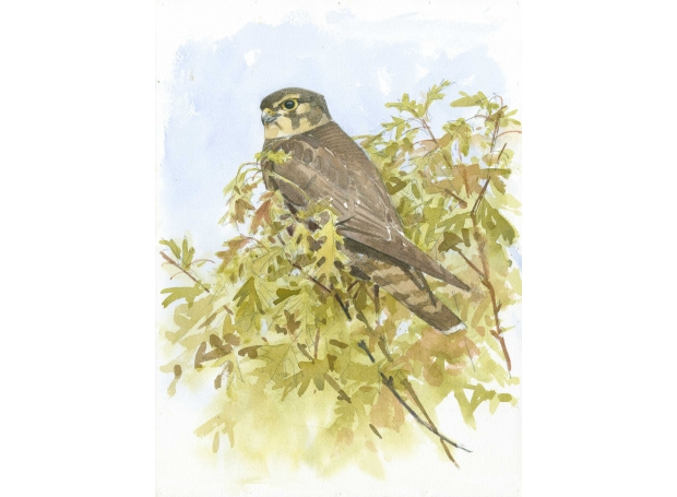 Dusen-Barry-van-Merlin-in-Spring-Oak.jpg