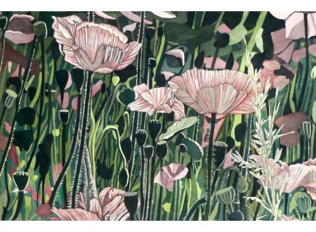Dutton-Meg-Poppy-Field.jpg