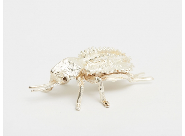 Frew-Hilary-Beetle.jpg