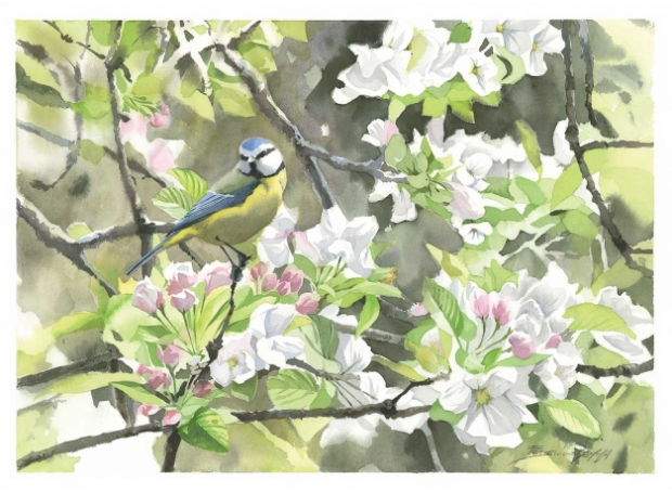 Gemma-Federico-Blue-Tit-(Cyanistes-Caeruleus)-Perched-In-A-Flowering-Apple-Tree.jpg