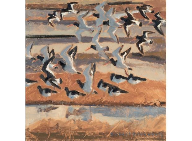 Greenhalf-Robert-Oystercatchers-flying-in.jpg