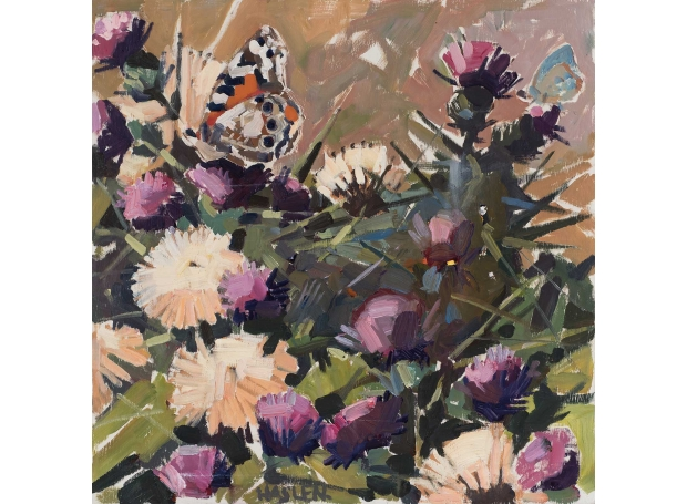 Haslen-Andrew-Painted-Lady.jpg