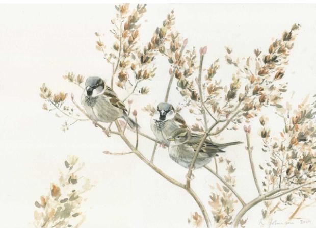 Johnson-Richard-House-Sparrows-in-winter-lilac.jpg