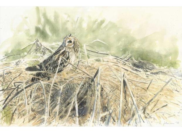 Johnson-Richard-Short-Eared-Owl's-Mid-Morning-Hunt---Burwell.jpg