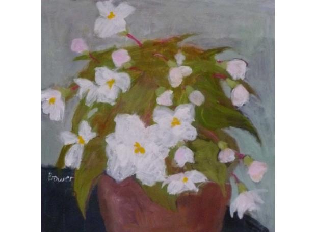 Bower-Susan-White-Begonia.jpg