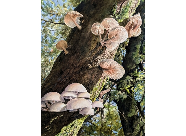 DesmondClarkPorcelain-Mushrooms-at-Haldon,-Devon-1.jpg