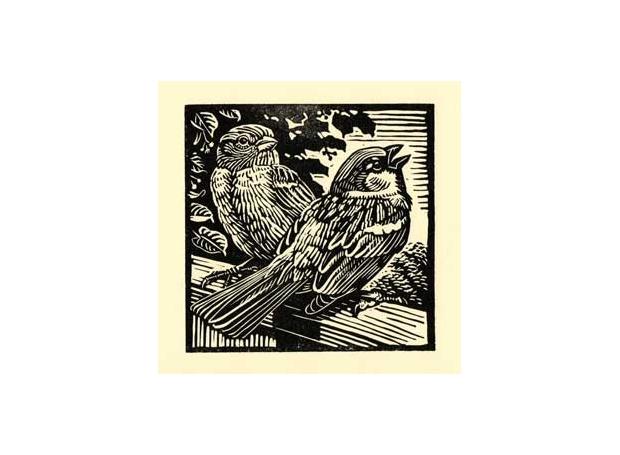 Allen-Richard-House-Sparrows.jpg