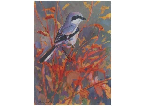 Cole-Daniel-Great-Grey-Shrike.jpg