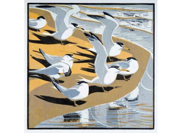 Greenhalf-Robert-Little-Terns-2.jpg
