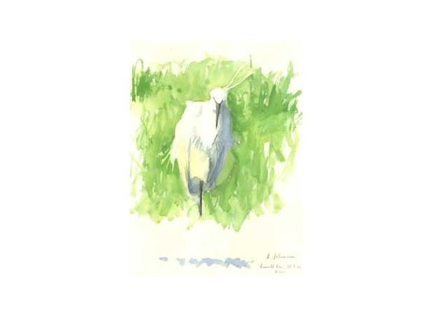 Johnson-Richard-Preening-Little-Egret---Burwell-Fen.jpg