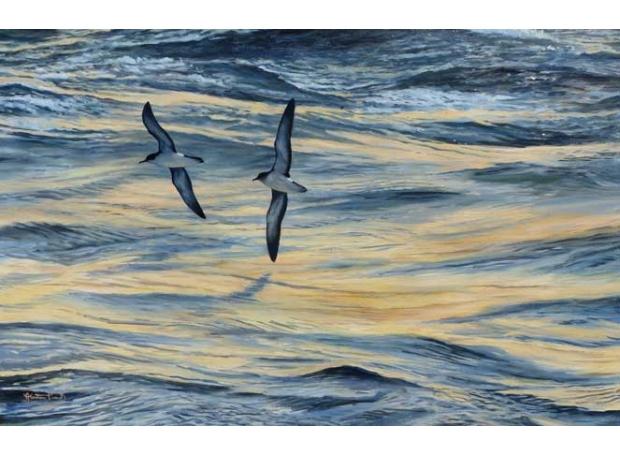 Proud-Alastair-Tranquil-seas-and-shearwaters.jpg