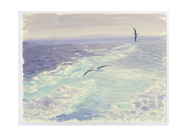 Rees-Darren-Black-browed-Albatrosses-in-the-wake-(From-Ice-Bound).jpg