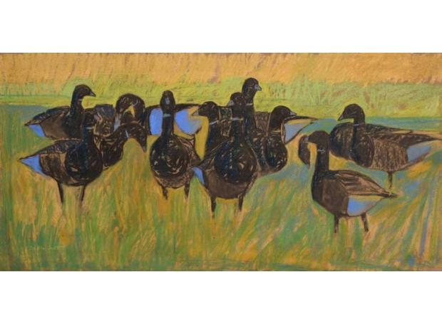 Scott-Dafila-Brent-geese.jpg