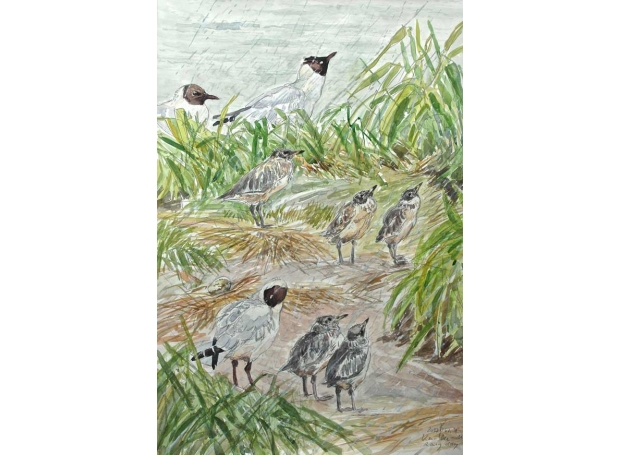 Boensch-Stefan-Black-Headed-Gull.jpg